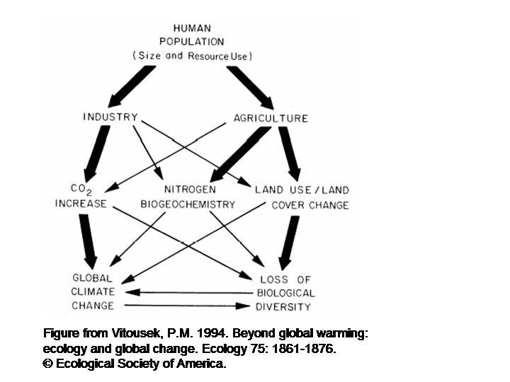 human impact on ecosystems essay help
